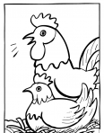 cadre de poules
