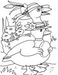 canard avec de beaux chapeaux