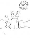 chat assis sous le soleil
