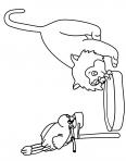 chaton qui boit de l'eau