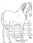 cheval dans un enclos