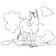 cheval dans une plaine sauvage