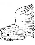 chien au poils longs