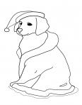 chien dans la neige avec son bonnet