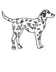 chien des 101 dalmatiens