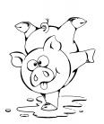 cochon fait le rigolo avec une flaque d'eau