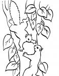 copains écureuils