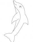 dauphin au fond de l'océan