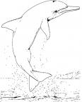 dauphin hors de l'eau