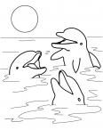 dauphins qui rigolent entre eux