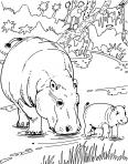 des hippopotames en famille