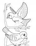 deux oiseaux jouent ensemble