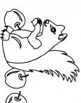 écureuil dans la foête