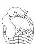écureuil dans un panier