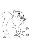 écureuil qui a attrapé une noisette