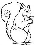 écureuil un peu vieux
