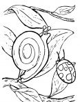 escargot et coccinelle