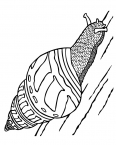 escargot sur un arbre
