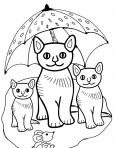 famille de chats sous un parapluie