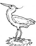 grand oiseau fait son nid