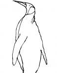 grand pingouin de dos