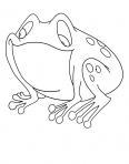grenouille qui a faim