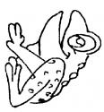grenouille qui chante