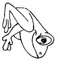 grenouille qui va sauter