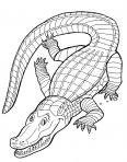 gros crocodille qui dort au soleil