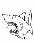 gros requin qui baille