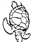 grosse tortue de mer