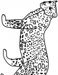 guépard cherche à manger