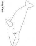 jeune baleineau