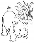 jeune rhinocèros léche les fourmis