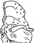 jeune rhinocèros qui dort