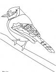 joli oiseau qui attend