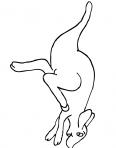 kangourous fait une course de vitesse