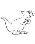 kangourous s'entraine à la boxe