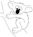Koala avec une drôle de tête