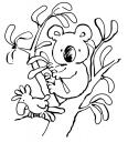 Koala dans des feuilles