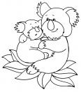 Koala et son papa