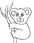 koalas rigole sur une branche