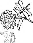 libellule et papillion