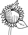 libellule posée sur un tournesol