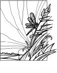 libellule sur un roseau