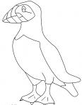 oiseau avec un gros bec