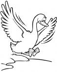 oiseau qui bat des ailes