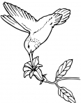 oiseau qui glutine