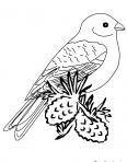 oiseau se repose sur un arbre