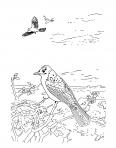 oiseaux dans un beau paysage